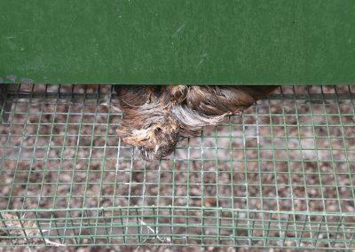 Photo-5-Dead-Bird-A-170710