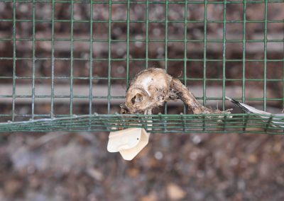 Photo-7-decomposed-bird-egg-tray